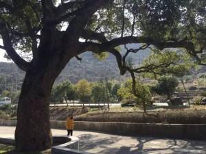 樟树下,是我家,我的故乡依旧回得去 | 回乡系列